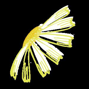 Corn chamomile